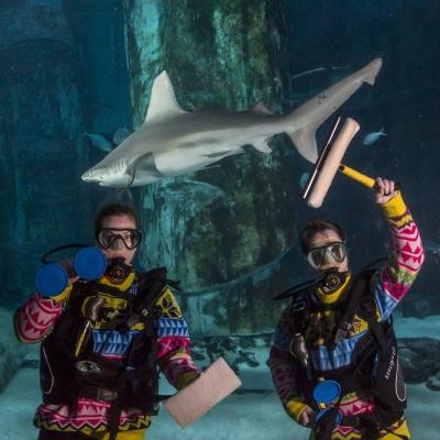 due sub con muta natalizia e uno squalo