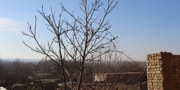 Paesaggio in Afghanistan con albero in primo piano e muretto in pietra sulla destra della foto